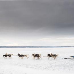 «Жигулевская долина» выступает стратегическим партнером международной гонки «Волга Квест-2020»